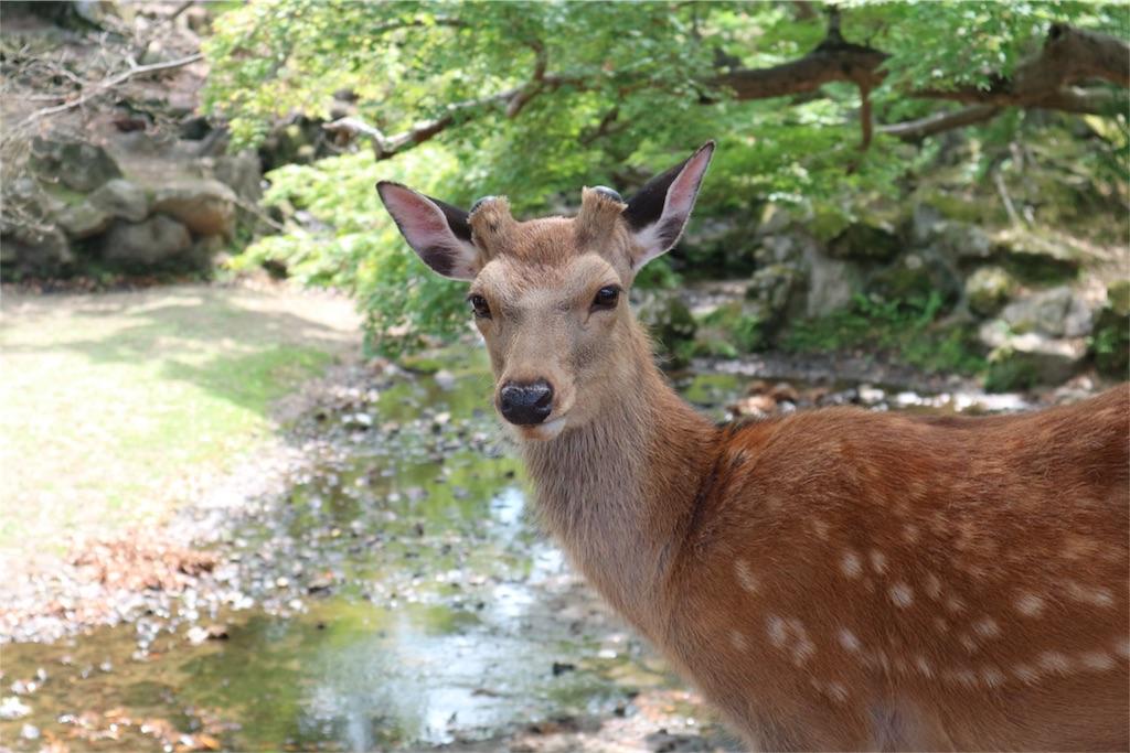 f:id:kosaku-tabi:20170604182028j:image