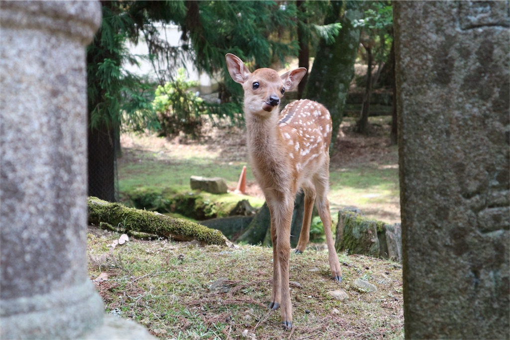 f:id:kosaku-tabi:20170604183339j:image