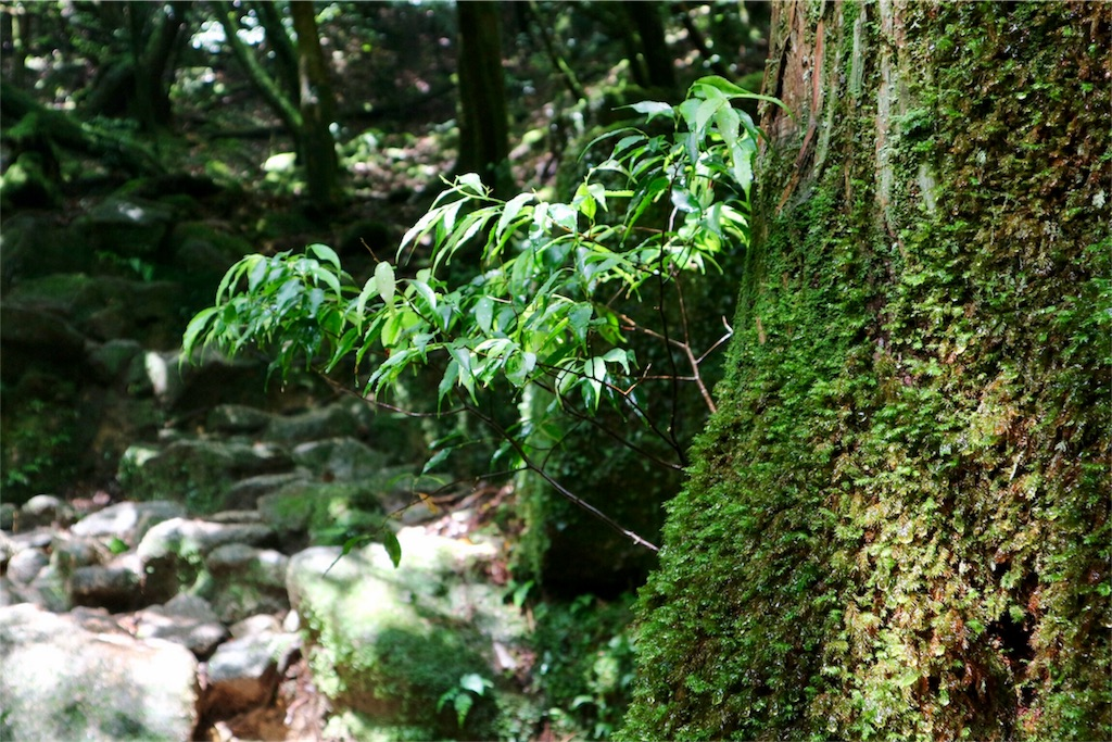 f:id:kosaku-tabi:20170815215541j:image
