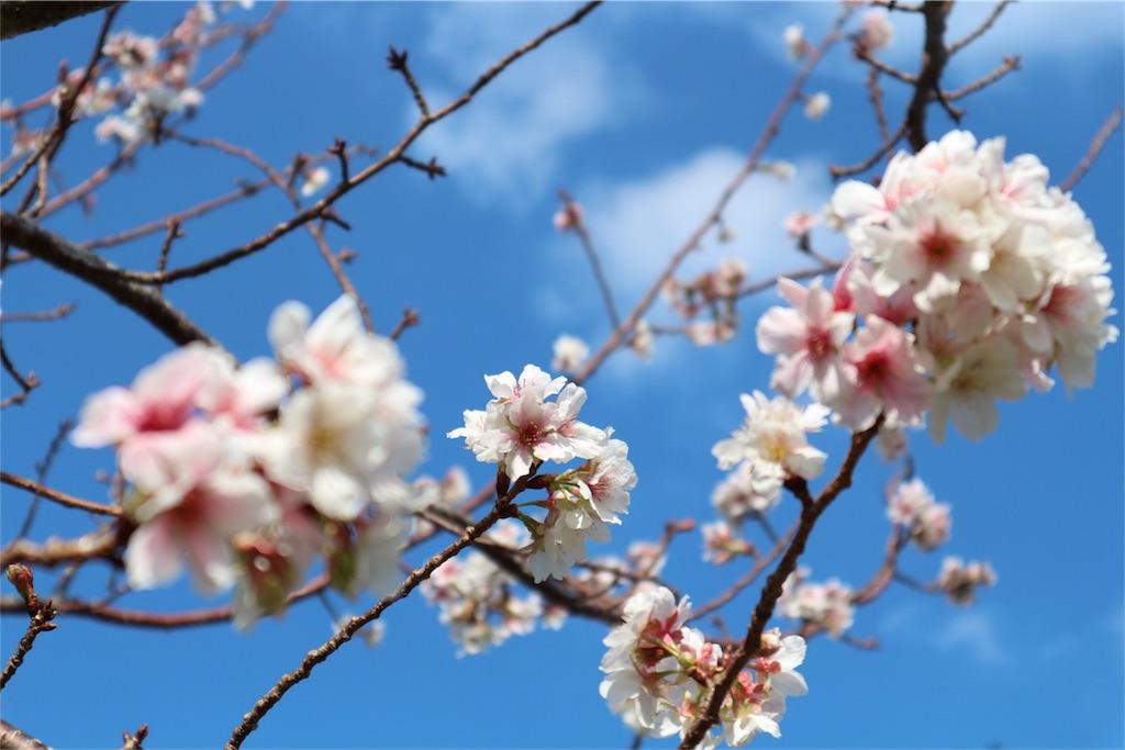f:id:kosaku-tabi:20181106132104j:image