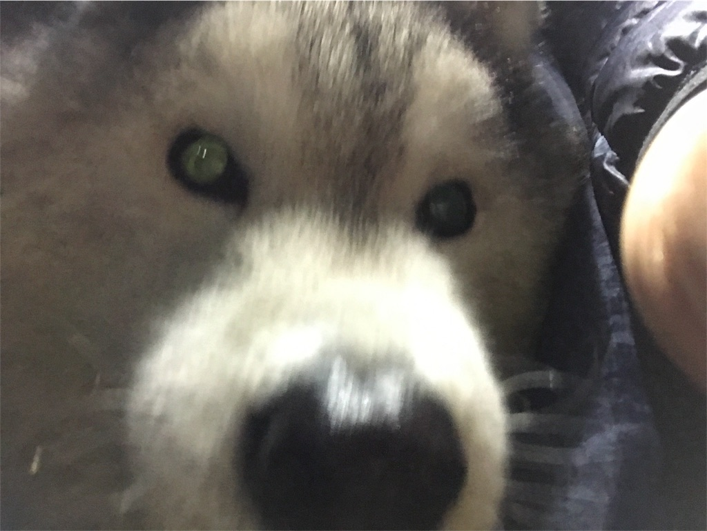 f:id:kosaku-tabi:20181112221520j:image