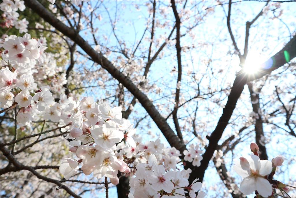 f:id:kosaku-tabi:20190413164327j:image