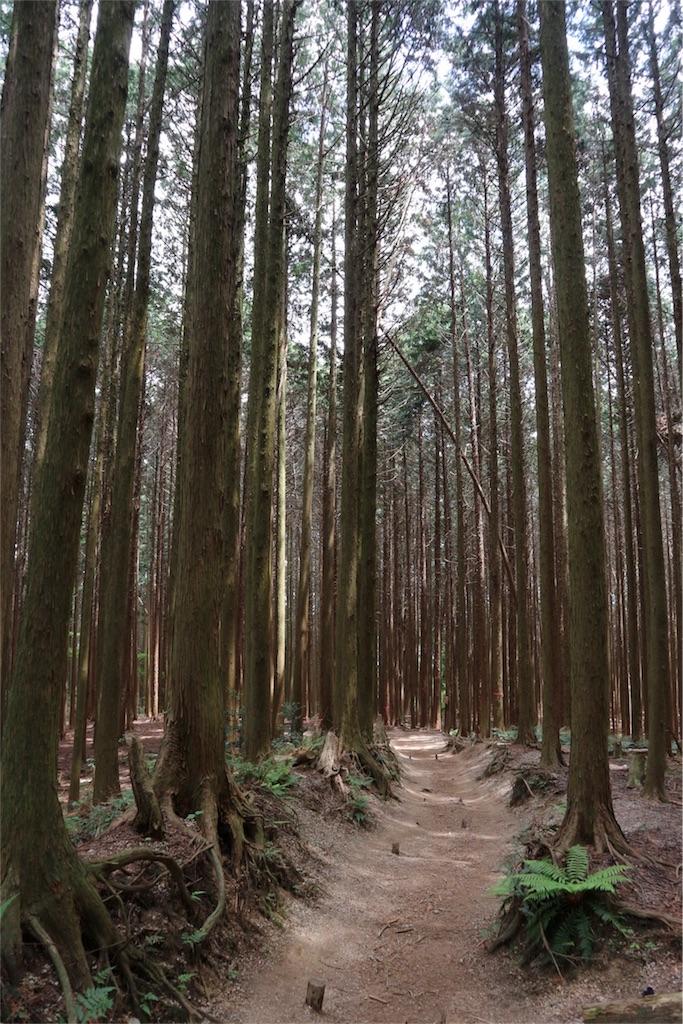 f:id:kosaku-tabi:20190519121259j:image