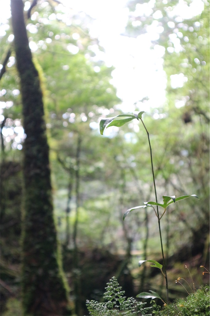 f:id:kosaku-tabi:20210211134534j:image