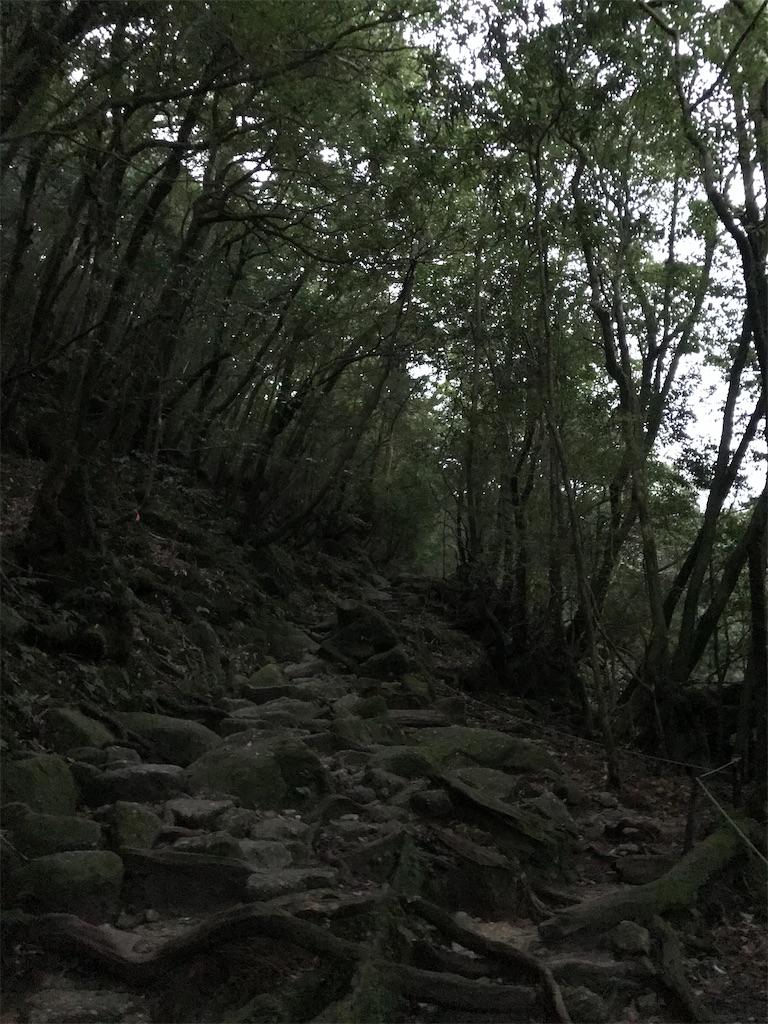 f:id:kosaku-tabi:20210211144253j:image