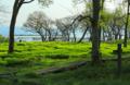 京都新聞写真コンテスト湖岸ののうるし
