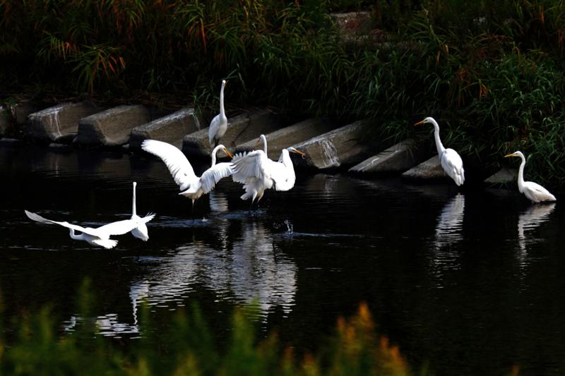 京都新聞写真コンテスト安曇川遊園地