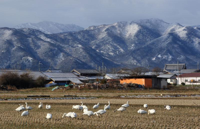 京都新聞写真コンテスト湖北の佇まい