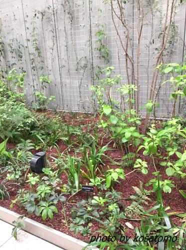 銀座シックスの屋上庭園