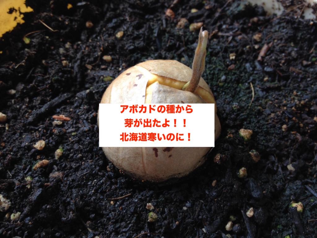 f:id:koshibu:20160720192120j:plain