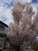 f:id:koshiji:20180416144321j:image