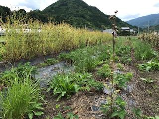 f:id:koshijiyoko:20200602133226j:plain