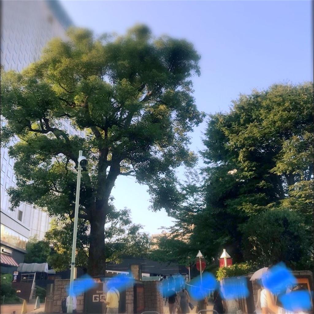 f:id:koshikakeol:20190804140058j:plain