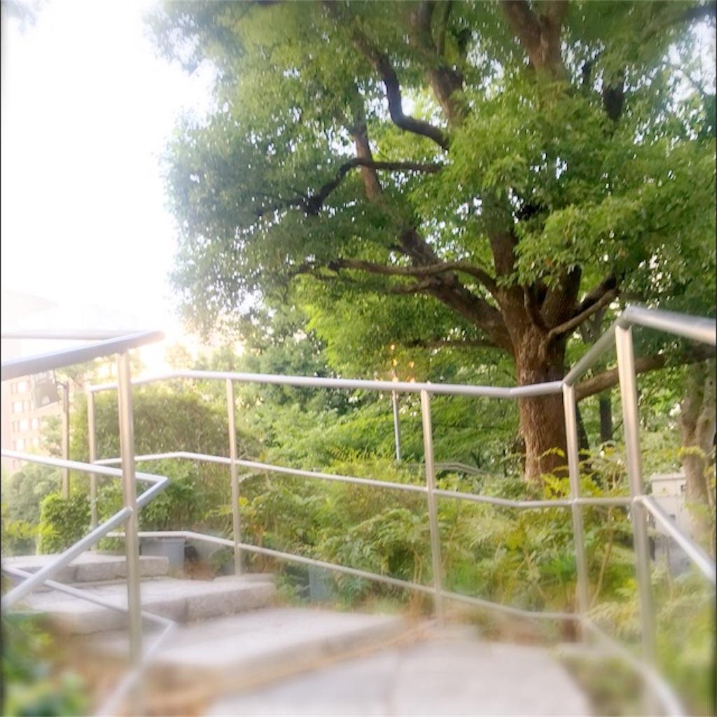 f:id:koshikakeol:20190804140156j:image