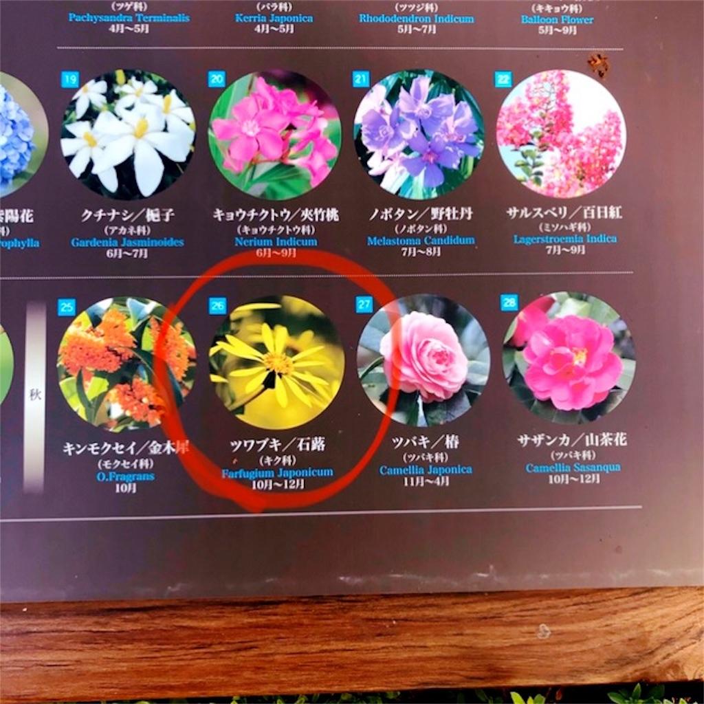 f:id:koshikakeol:20191104182418j:image