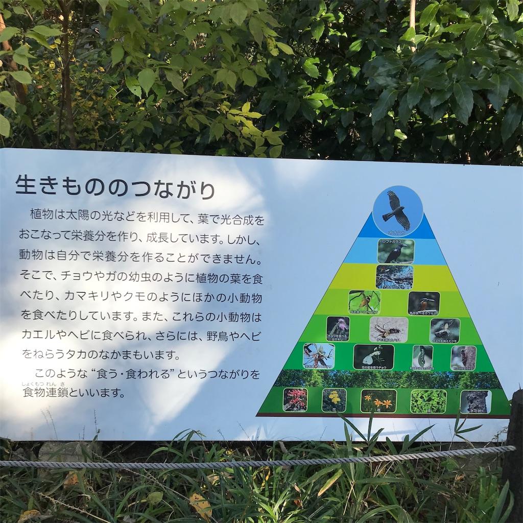 f:id:koshikakeol:20191208214440j:image
