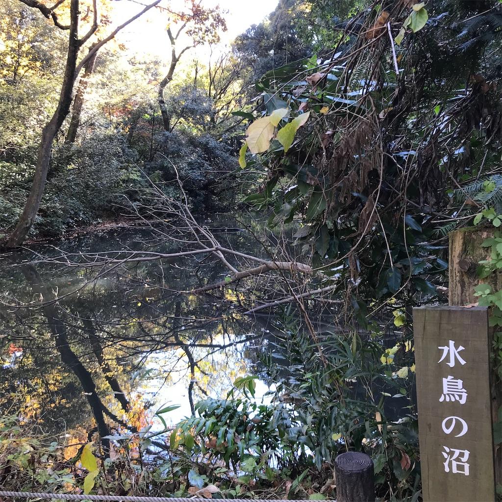 f:id:koshikakeol:20191208214528j:image