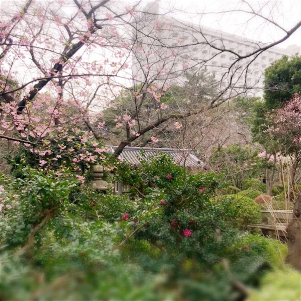 f:id:koshikakeol:20200215224836j:image