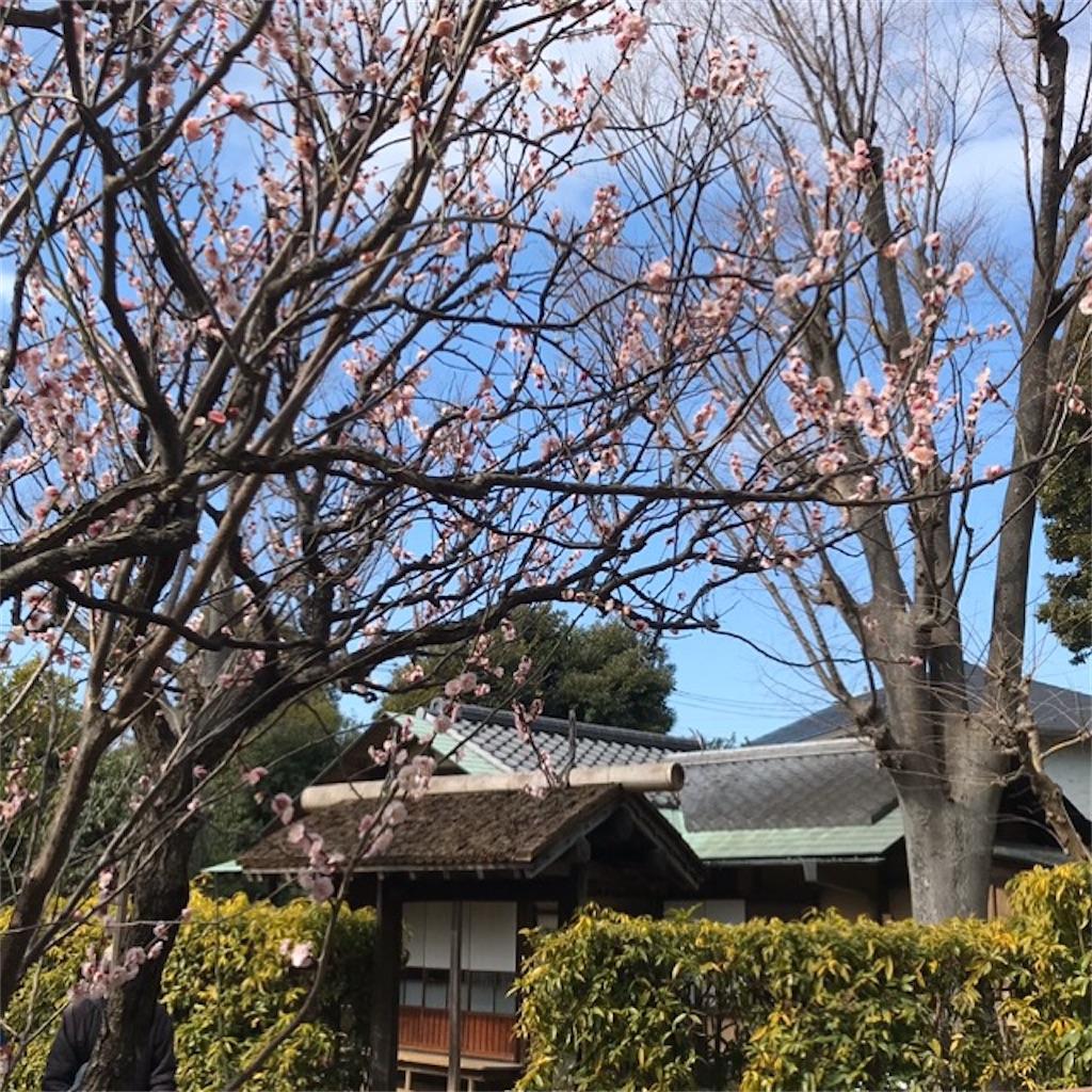 f:id:koshikakeol:20200224140625j:image
