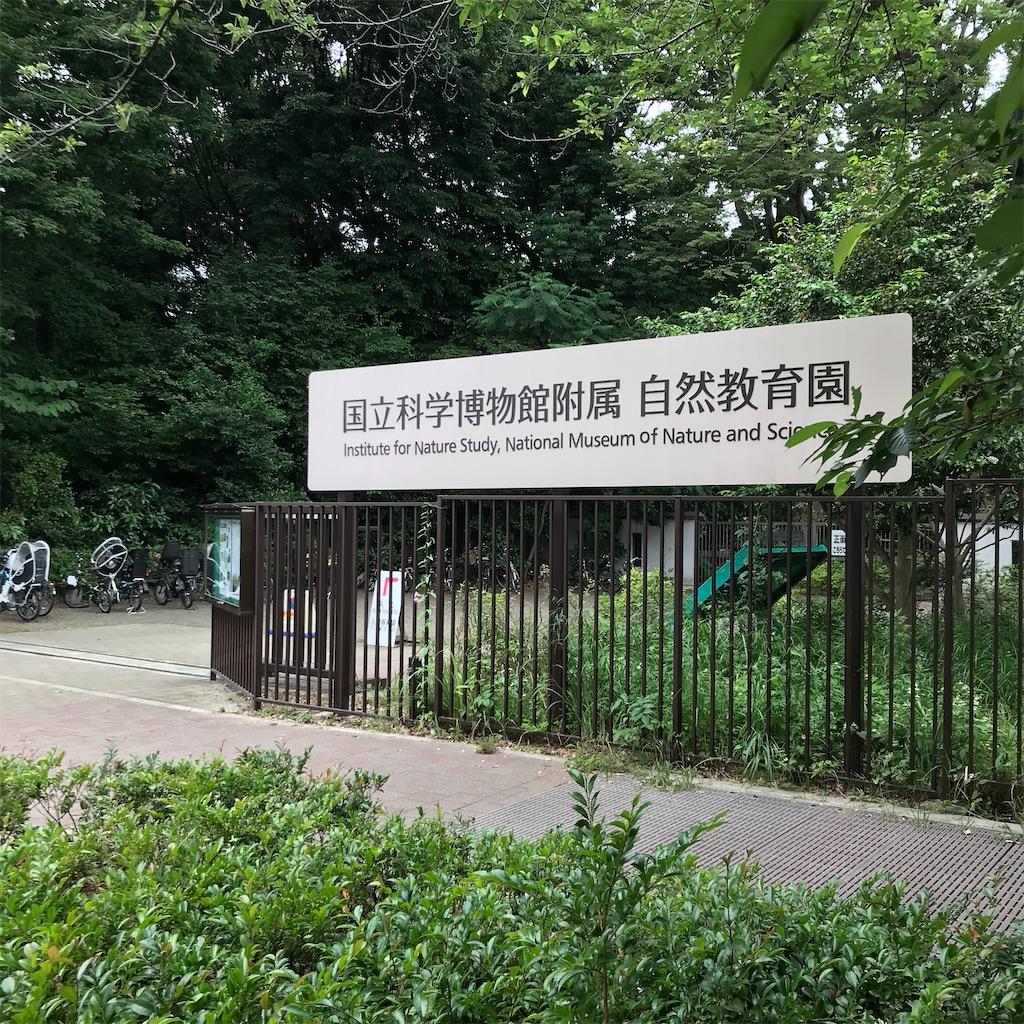 f:id:koshikakeol:20200607174820j:image