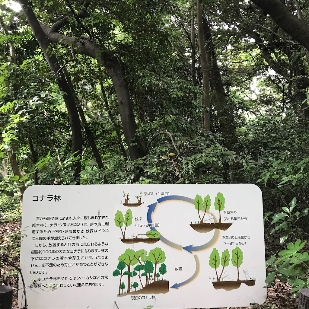 f:id:koshikakeol:20200607175101j:plain