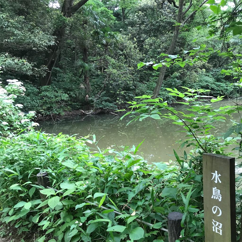 f:id:koshikakeol:20200607175208j:image