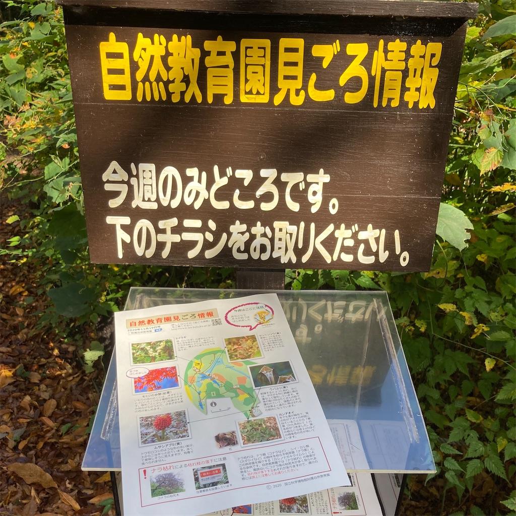 f:id:koshikakeol:20201126122439j:image