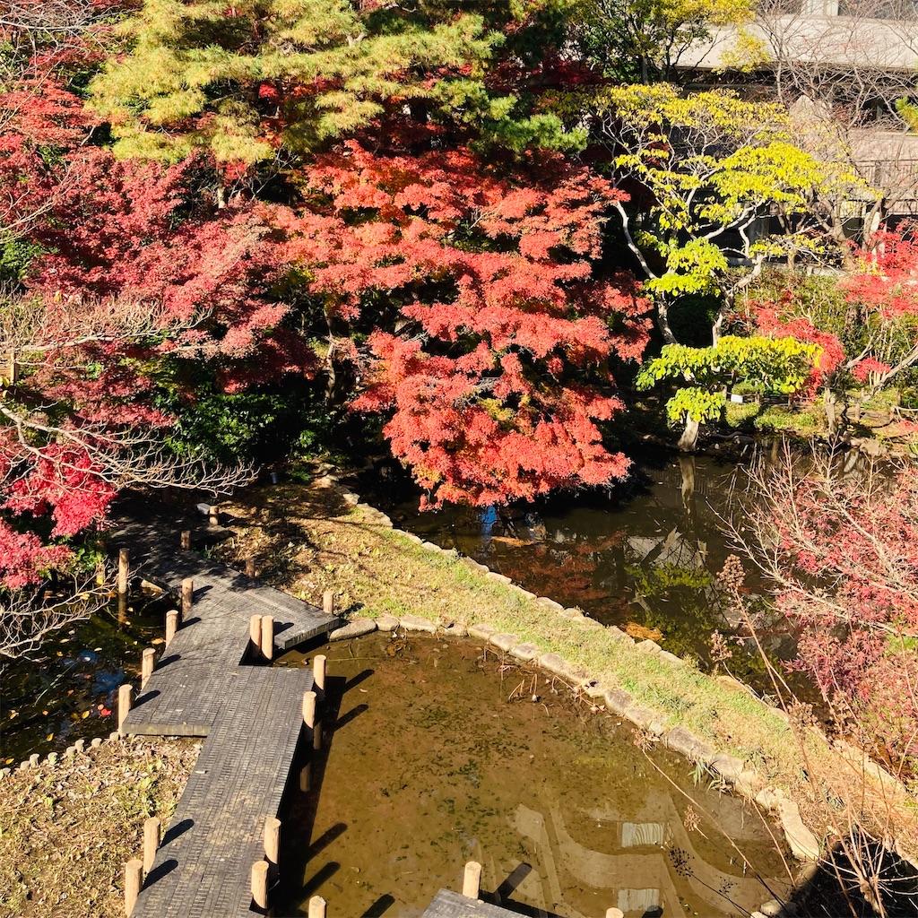 f:id:koshikakeol:20201207211806j:image
