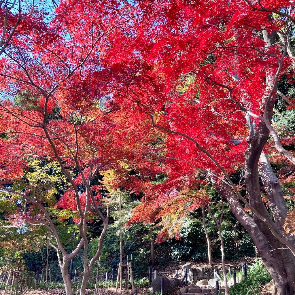 f:id:koshikakeol:20201214123646j:image
