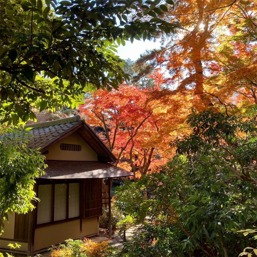 f:id:koshikakeol:20201217125954j:image