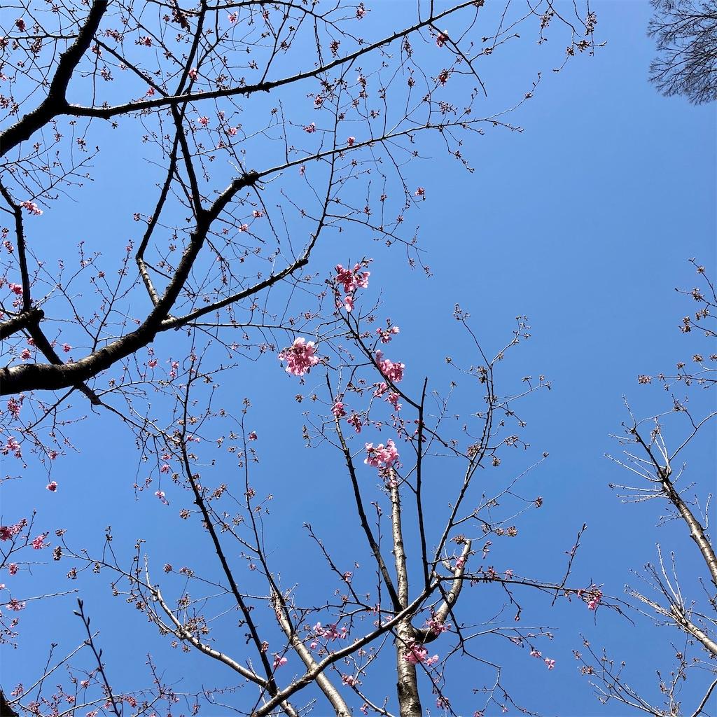 f:id:koshikakeol:20210310151447j:image