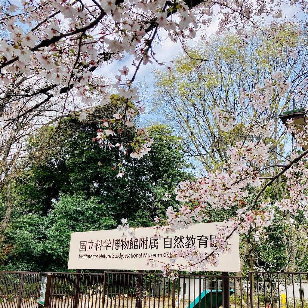f:id:koshikakeol:20210322123156j:image