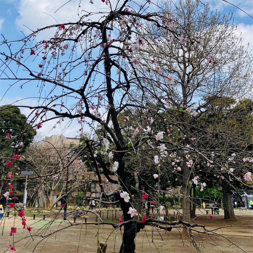 f:id:koshikakeol:20210322182255j:image