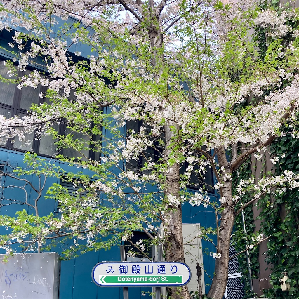 f:id:koshikakeol:20210329124831j:image