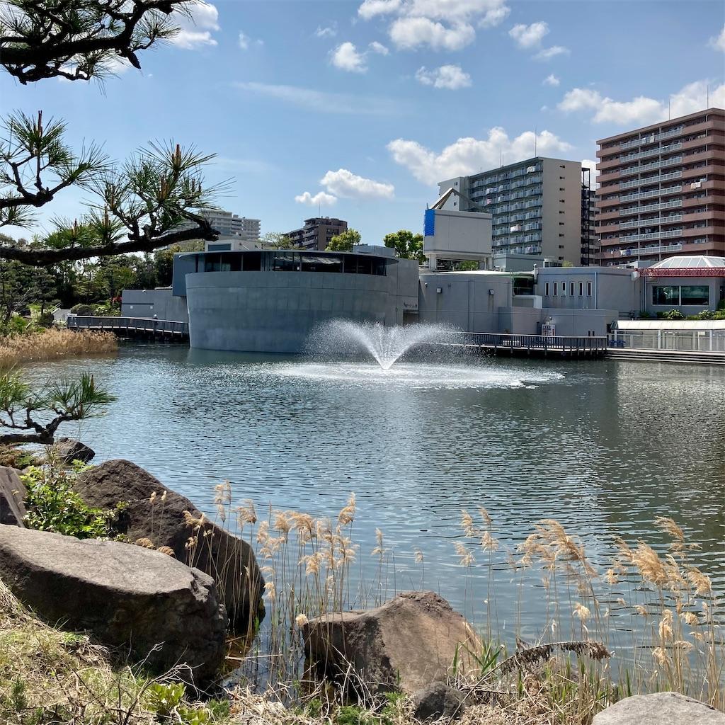 f:id:koshikakeol:20210412122348j:image