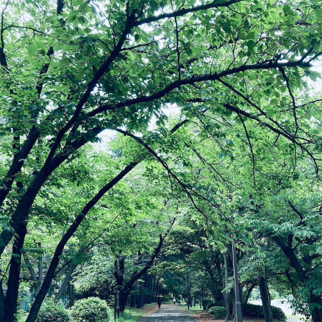 f:id:koshikakeol:20210514160917j:image