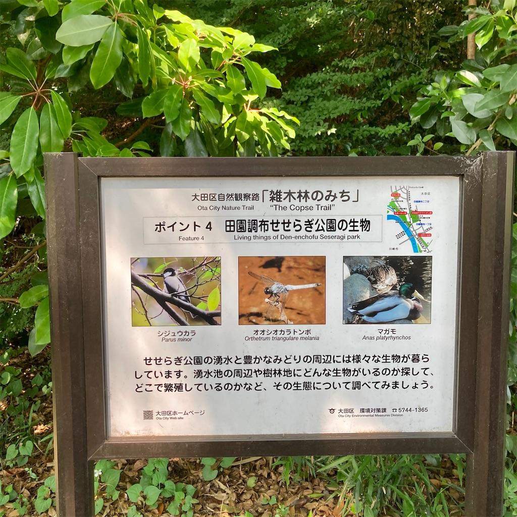 f:id:koshikakeol:20210525160424j:image