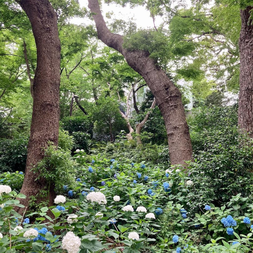 f:id:koshikakeol:20210605171309j:image