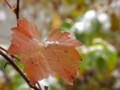 紅葉に初雪