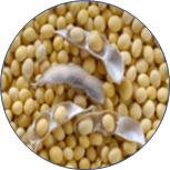 米胚芽と大豆
