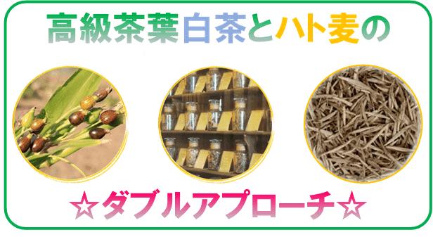 白茶の原料とハト麦茶の原料