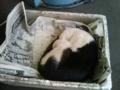 気持ち良さそうに寝ている猫