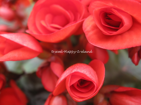 f:id:kosodate-blog-ireland-mama:20170727001656j:plain