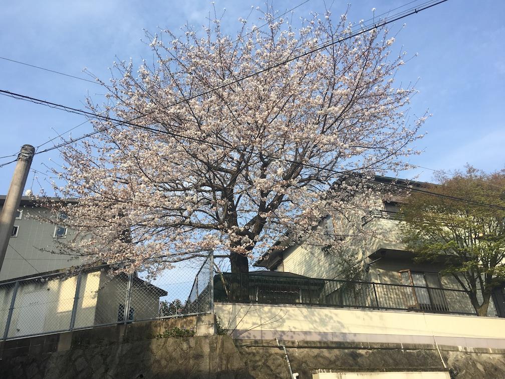 f:id:kosuke-komiya:20180326102046j:plain