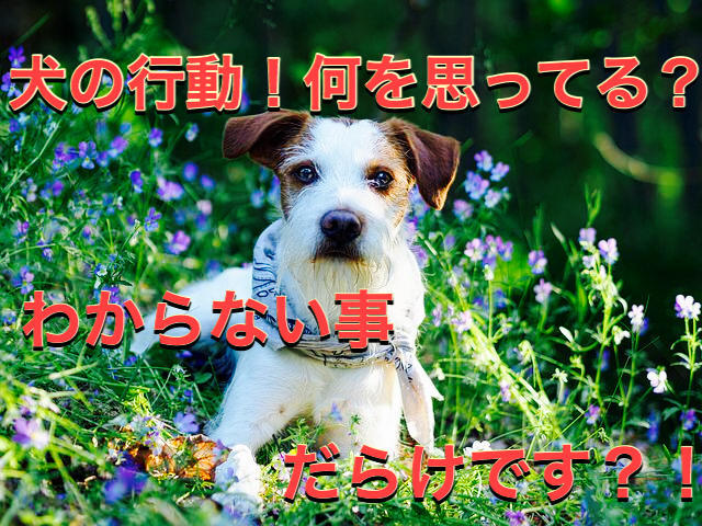 f:id:kosumosu7kun:20190923150008j:plain