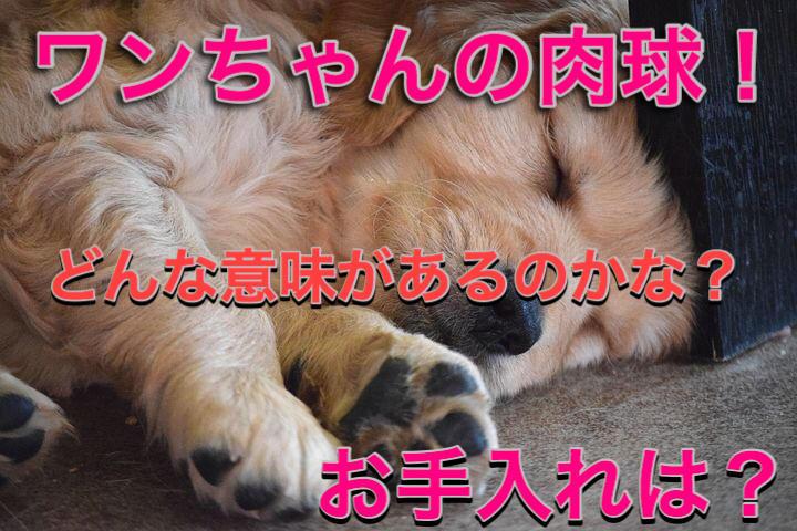 f:id:kosumosu7kun:20191012092507j:plain