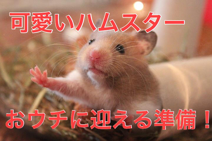 f:id:kosumosu7kun:20191024135326j:plain