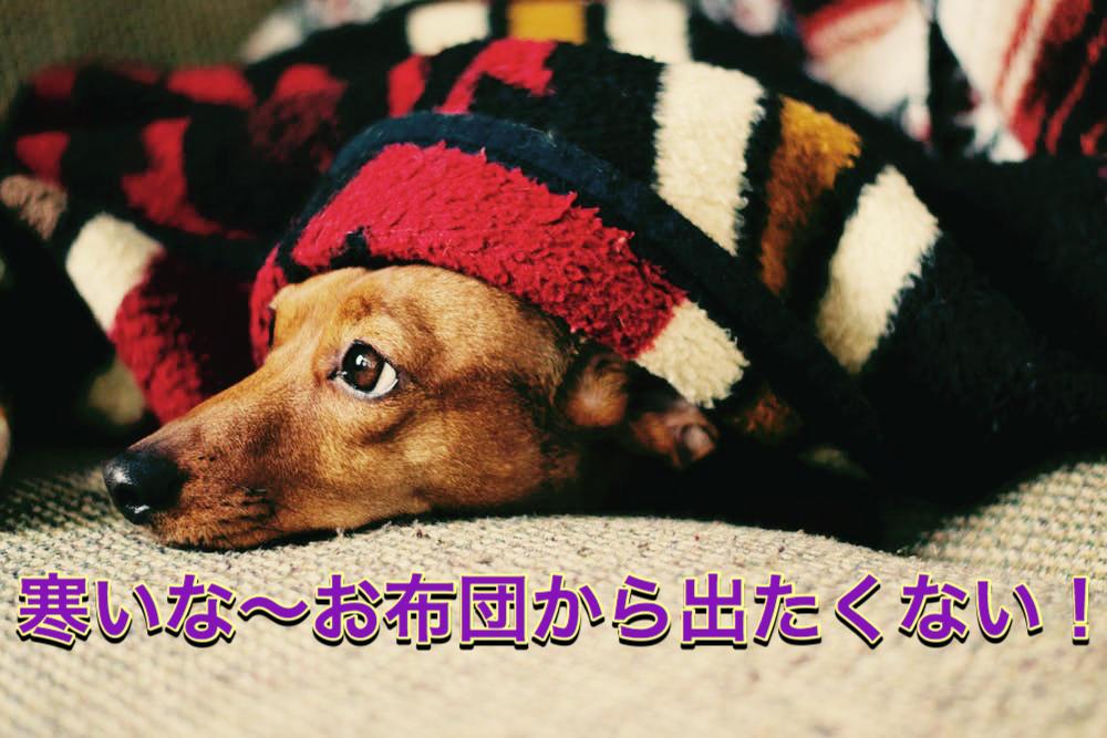 f:id:kosumosu7kun:20191202183147j:plain