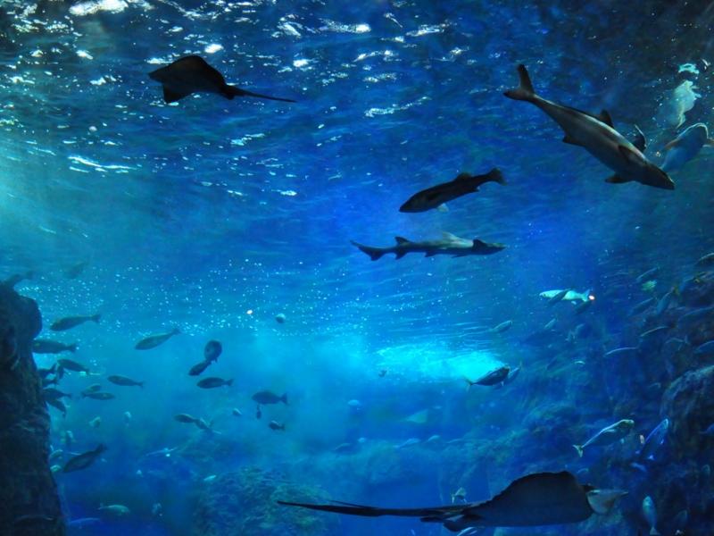 f:id:kota2009:20110501143627j:image:w360