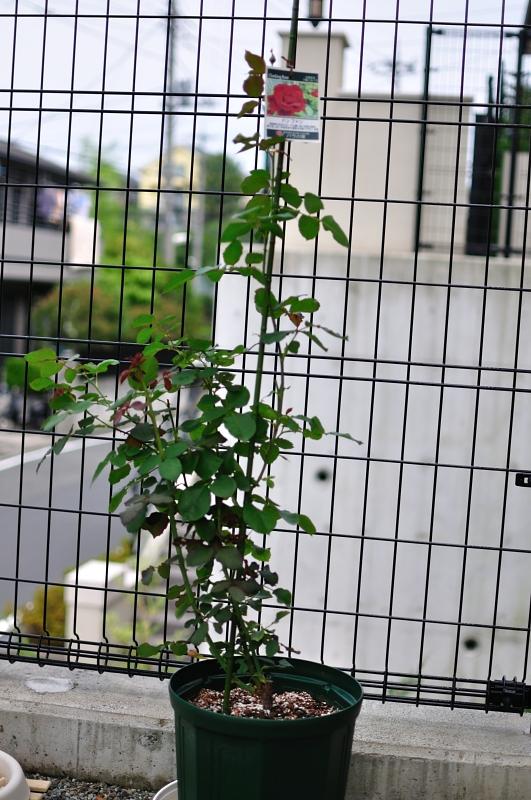 f:id:kota2009:20110703125930j:image:w240:left
